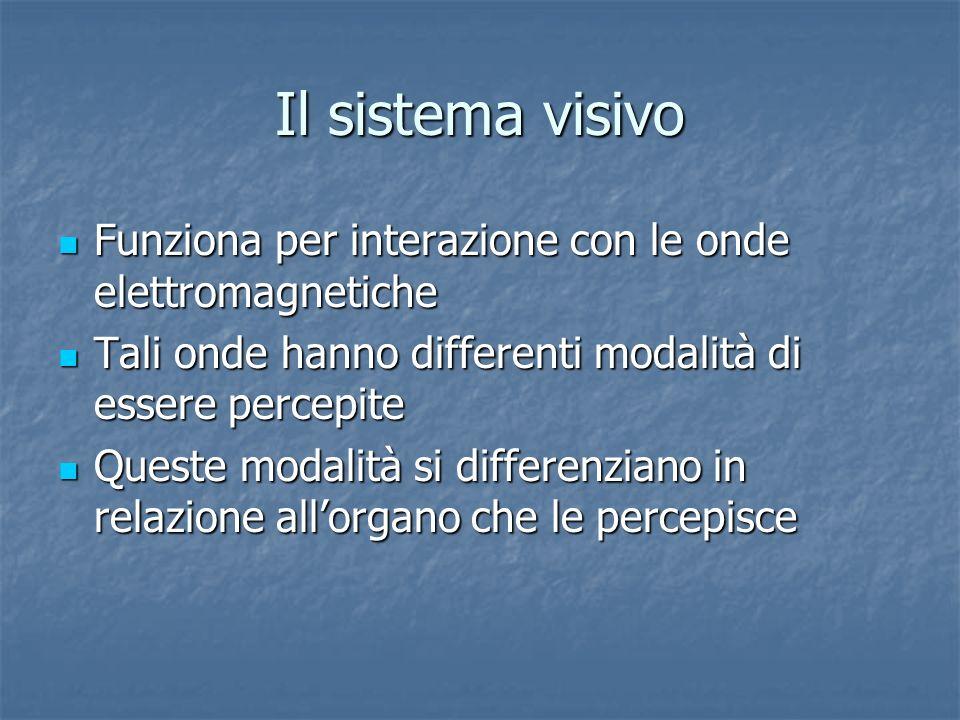 Il sistema visivo Funziona per interazione con le onde elettromagnetiche Funziona per interazione con le onde elettromagnetiche Tali onde hanno differ