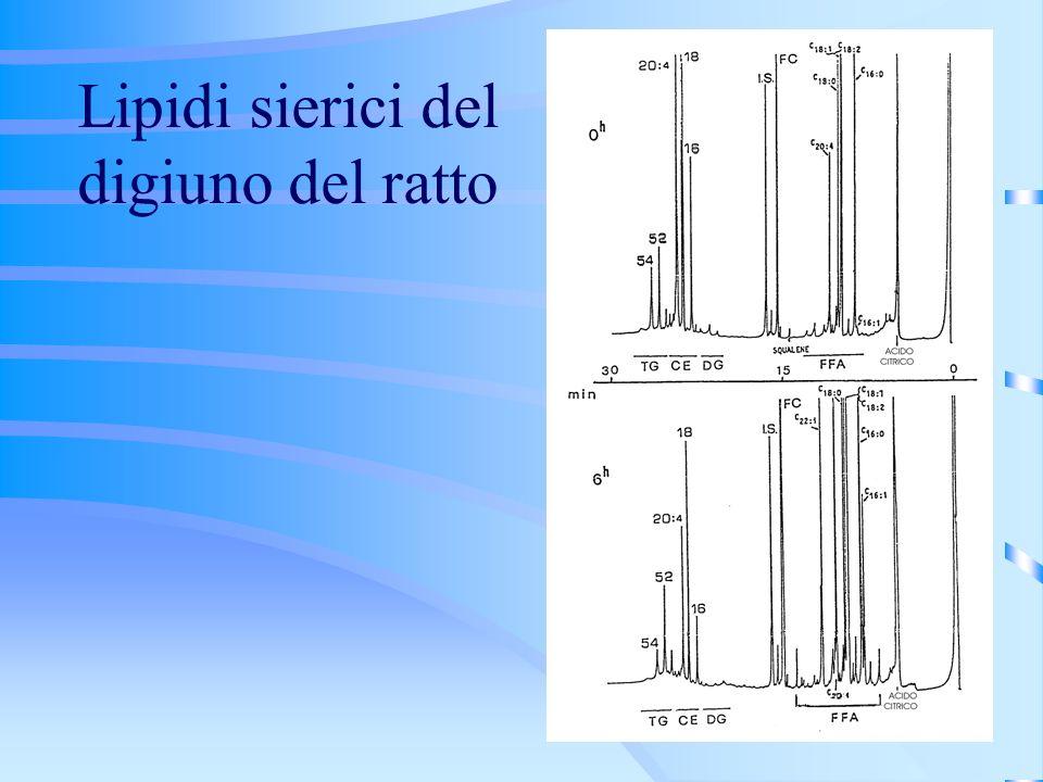 Lipidi sierici del digiuno del ratto