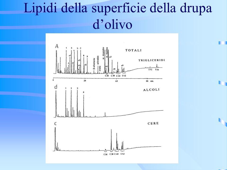 Lipidi della superficie della drupa dolivo