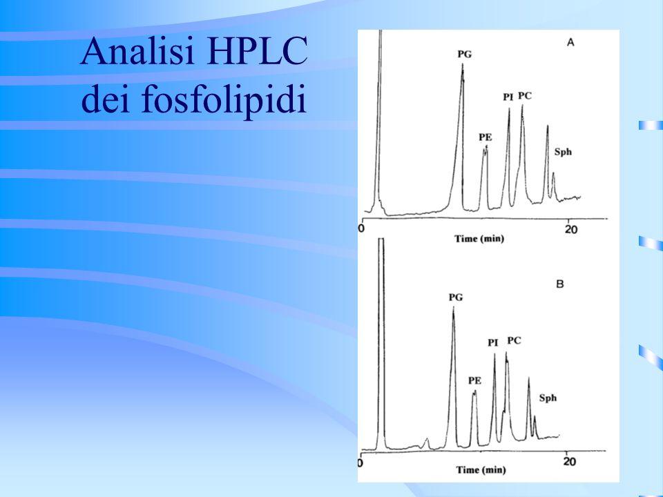 Analisi HPLC dei fosfolipidi
