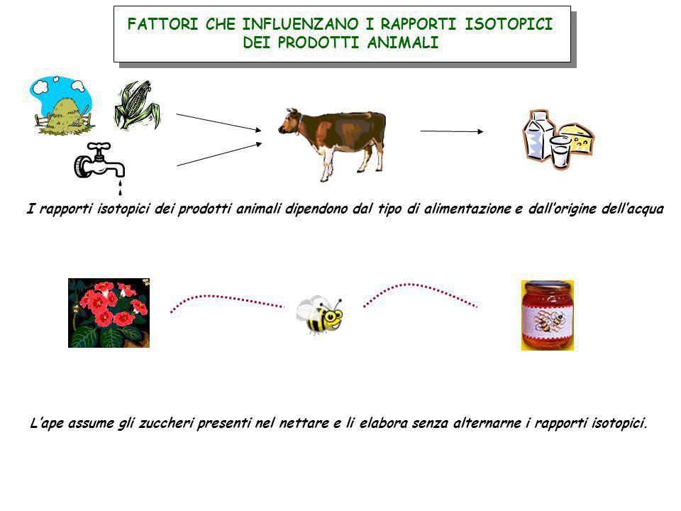 FATTORI CHE INFLUENZANO I RAPPORTI ISOTOPICI DEI PRODOTTI ANIMALI I rapporti isotopici dei prodotti animali dipendono dal tipo di alimentazione e dall