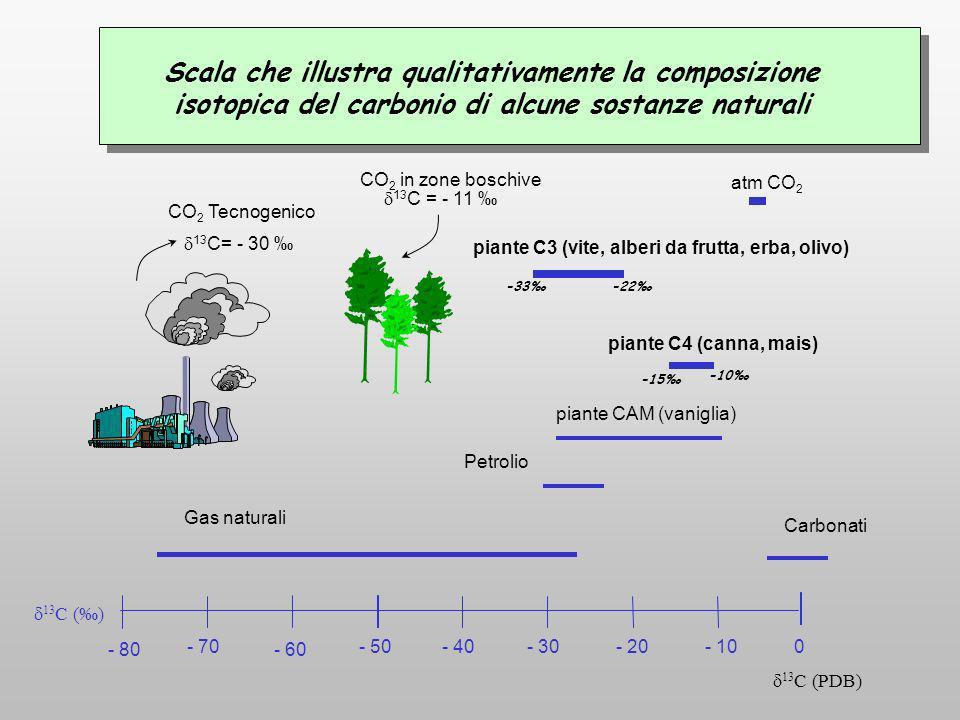 - 80 - 70 - 60 - 50- 40- 30- 20- 100 13 C () Gas naturali Petrolio piante CAM (vaniglia) atm CO 2 Scala che illustra qualitativamente la composizione