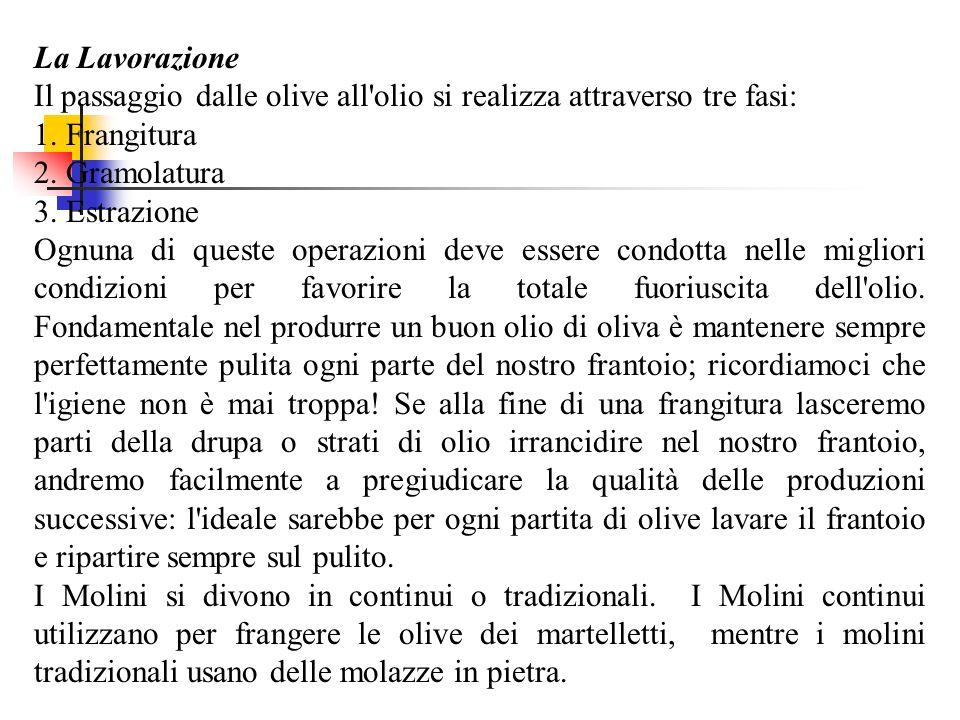 La Lavorazione Il passaggio dalle olive all'olio si realizza attraverso tre fasi: 1. Frangitura 2. Gramolatura 3. Estrazione Ognuna di queste operazio