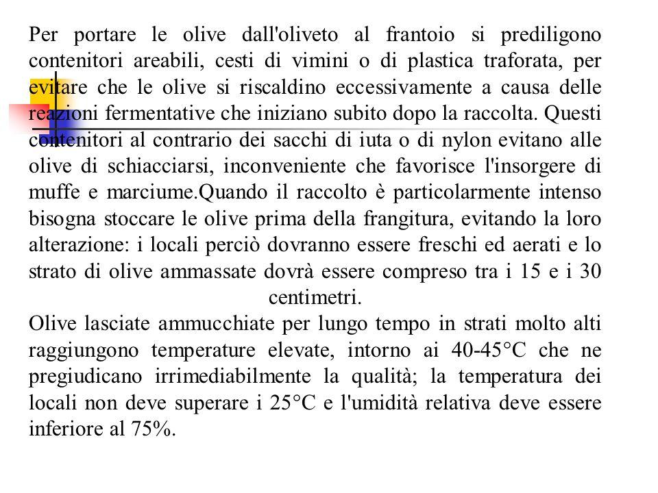 Per portare le olive dall'oliveto al frantoio si prediligono contenitori areabili, cesti di vimini o di plastica traforata, per evitare che le olive s