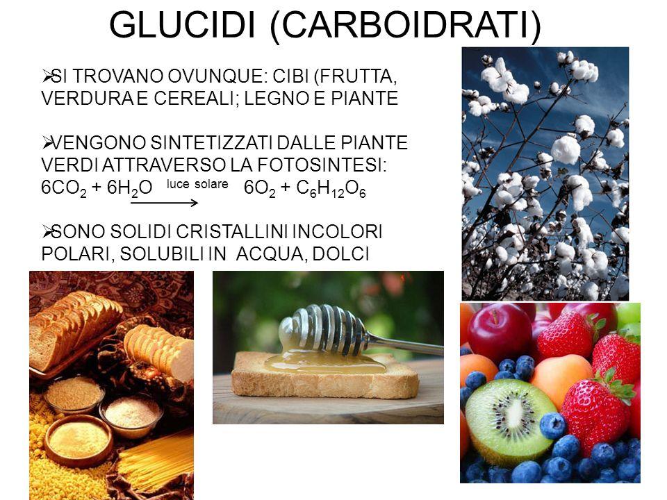 CLASSIFICAZIONE in base alla funzione: 1)Fonte di energia e carbonio per organismi non fotosintetici: glucosio, glicogeno, lattosio, amido e saccarosio 2) Elementi strutturali e di supporto: cellulosa, chitina, mureina, ribosio e deossiribosio 3) Adesione cellulare ad altre cellule e meccanismi di riconoscimento e identificazione: oligosaccaridi (glicoproteine, glicolipidi) 6) Farmaci (antibiotici): glicosidi