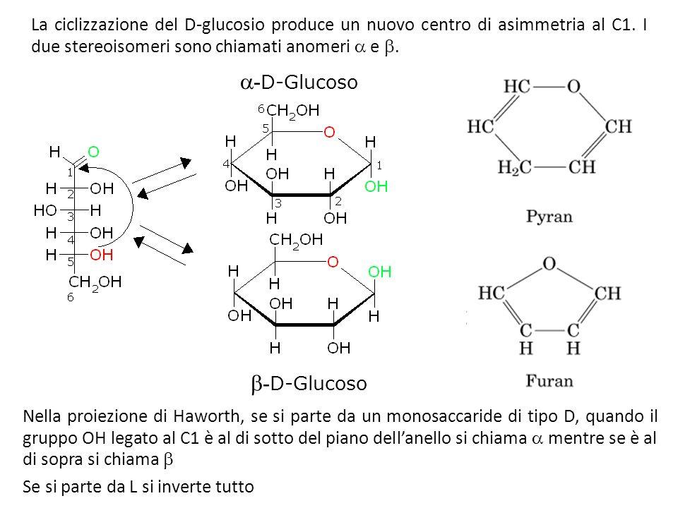 La ciclizzazione del D-glucosio produce un nuovo centro di asimmetria al C1. I due stereoisomeri sono chiamati anomeri e. Nella proiezione di Haworth,