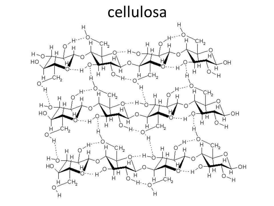 CHITINA Composto tipico dellesoscheletro degli artropodi, al quale conferisce grande resistenza meccanica.