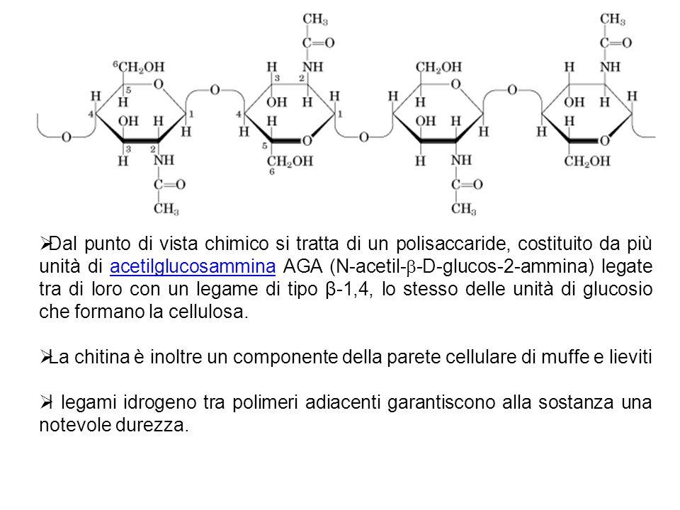Dal punto di vista chimico si tratta di un polisaccaride, costituito da più unità di acetilglucosammina AGA (N-acetil- -D-glucos-2-ammina) legate tra