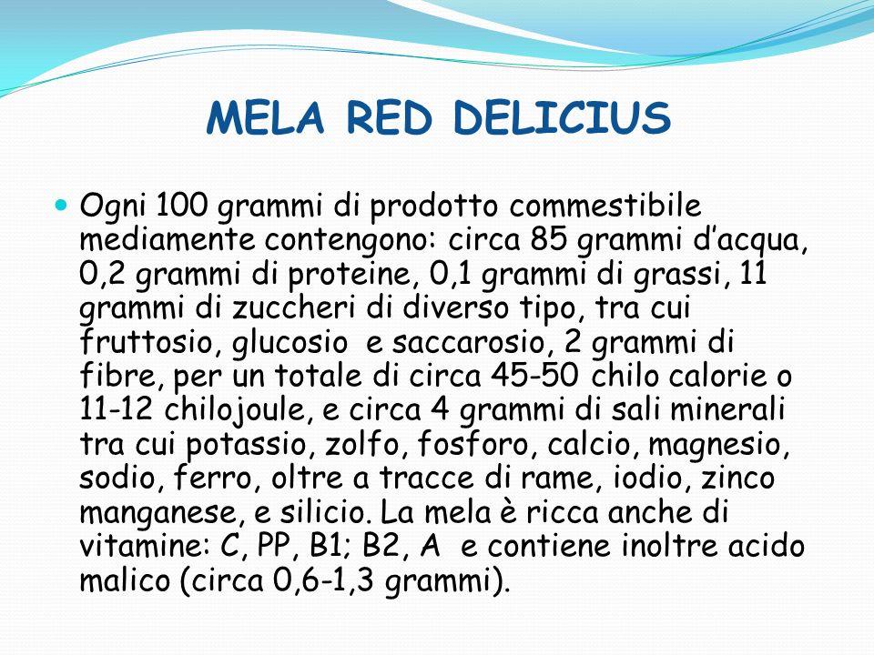 MELA GOLDEN DELICIUS Il frutto contiene molta acqua, poche proteine (0,2%) e grassi (0,3%), fibra, diversi zuccheri (11%), fosforo (12 mg), calcio (6 mg), ferro (0,3 mg), è povera di sodio e potassio, apporta vitamine C, PP, B1, B2 e A.
