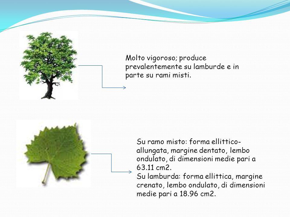 Famiglia Rosaceae Genere Malus Area di diffusione Provincia di Rieti, Comune di Poggio Nativo.