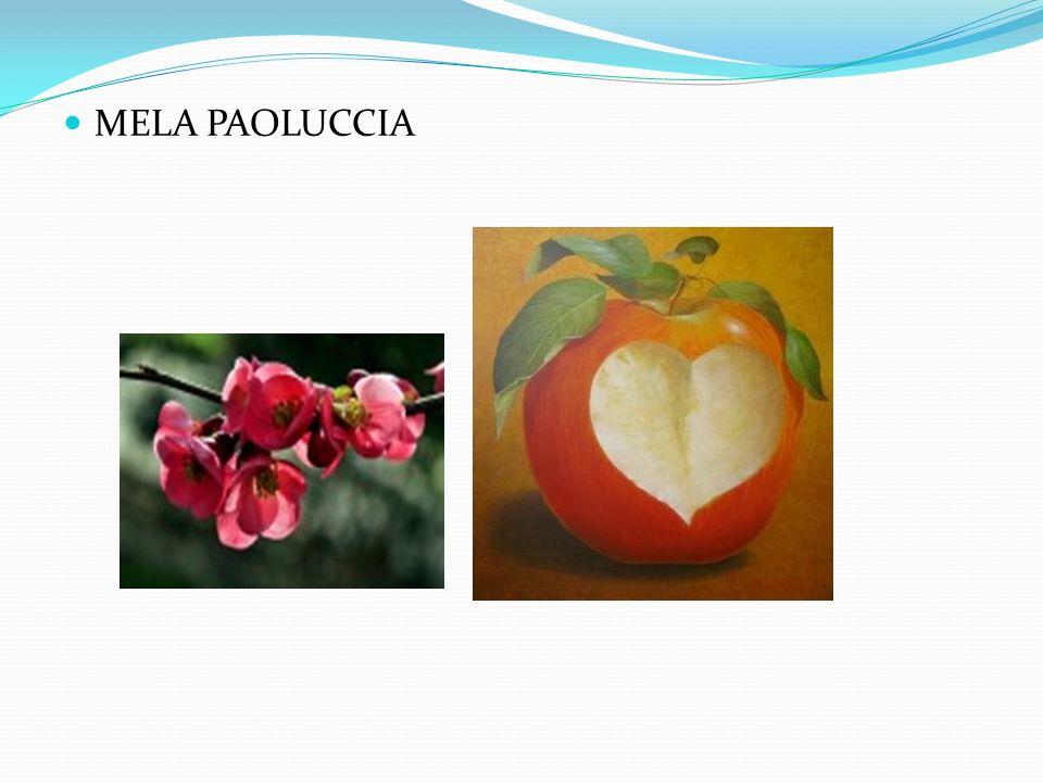 FENOLOGIA: Epoca di fioritura tardiva, epoca di raccolta autunnale (fine settembre).