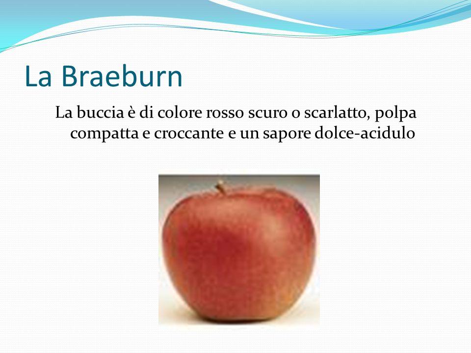 La mela Annurca Un frutto di piccole dimensioni rispetto alle altre mele, di forma rotondeggiante con epidermide rossa striata.