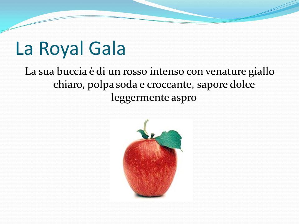 La Renetta Grigia È un prodotto tipico della zona di Barge, forma schiacciata, buccia ruvida e rugginosa, polpa grossolana dal colore bianco-crema, sapore dolce- acidulo