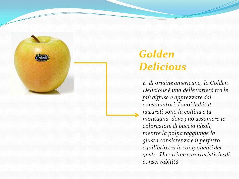 ORIGINI E STORIA La mela è originaria dellAsia centrale e occidentale e sembra risalire allepoca del Neolitico.