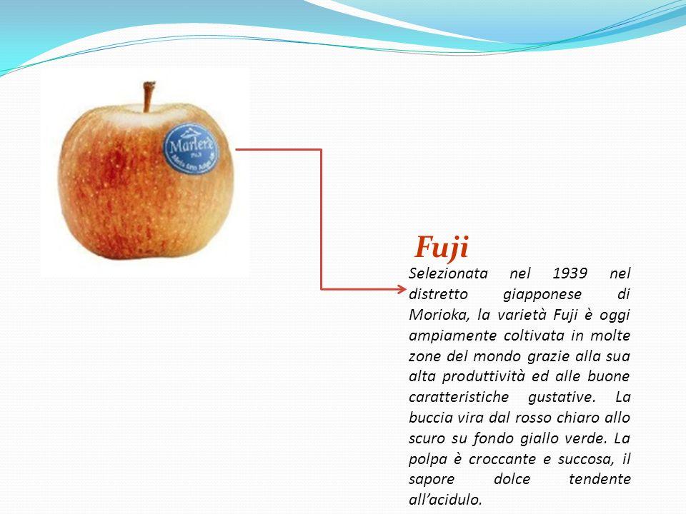 Renetta Con la buccia gialla leggermente verde, la polpa tenera e poco zuccherina, la mela renetta è uno dei frutti in grado di vantare una produzione piuttosto antica.