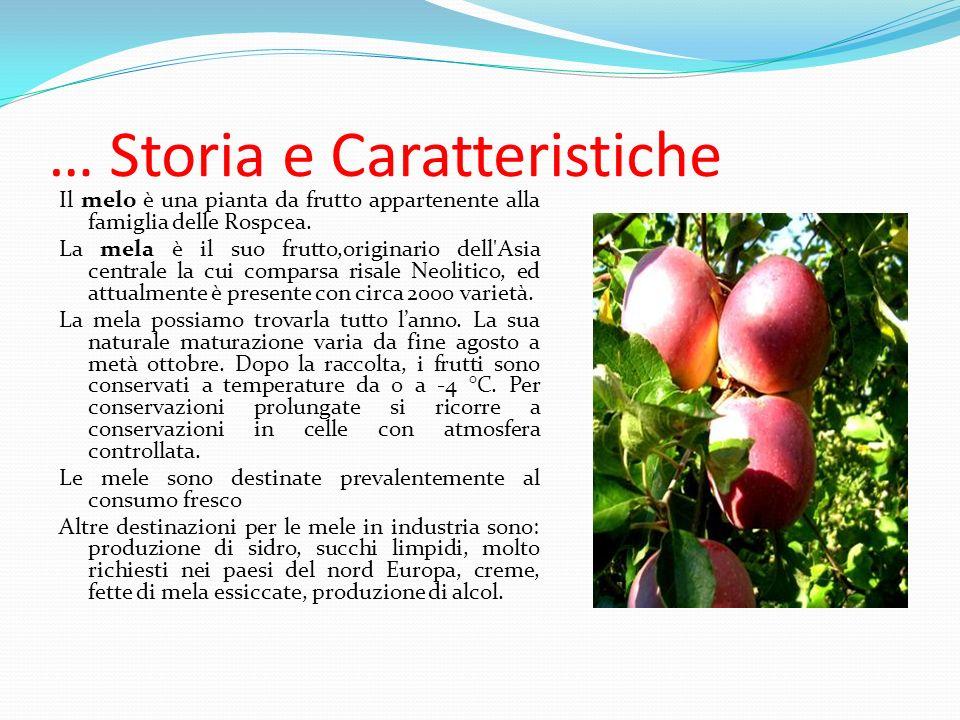 Allestremità della mela troviamo il picciolo, un piccolo filetto che ci permette di afferrare la mela in modo più comodo.