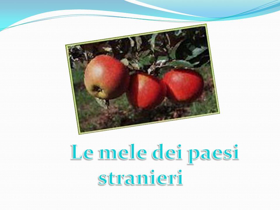 In seguito Paride fu inviato a Sparta dal padre come ambasciatore e conosciuta Elena nacque subito l amore.