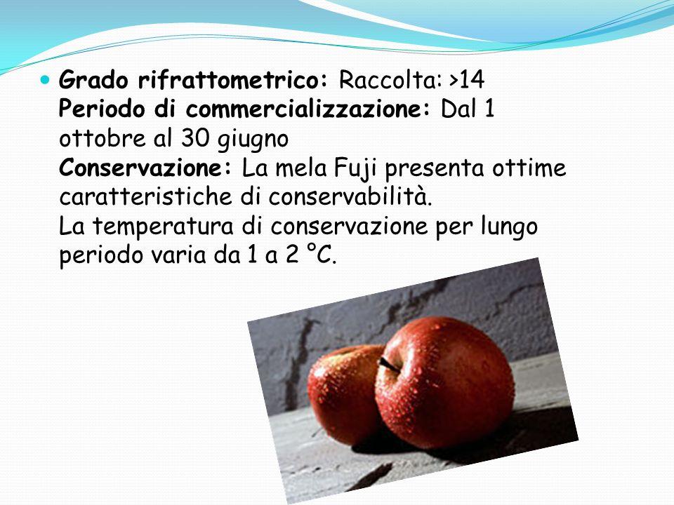 La mela Fuji, disponibile sul mercato da ottobre a giugno, è apprezzata dal consumatore per la dolcezza e succosità della polpa.