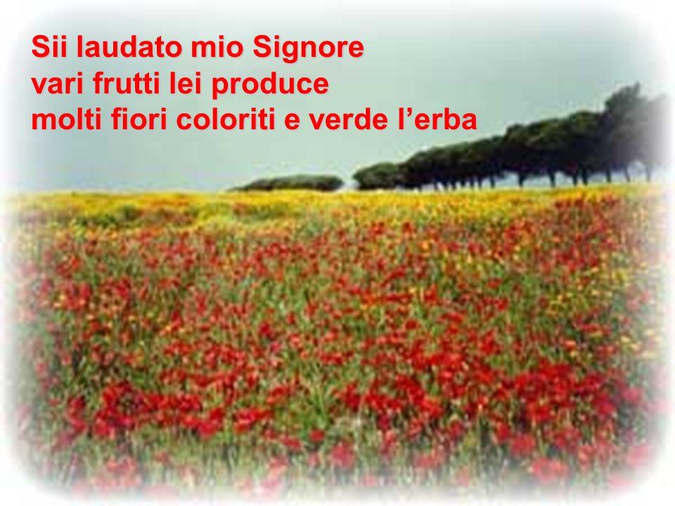 Sii laudato mio Signore vari frutti lei produce molti fiori coloriti e verde lerba