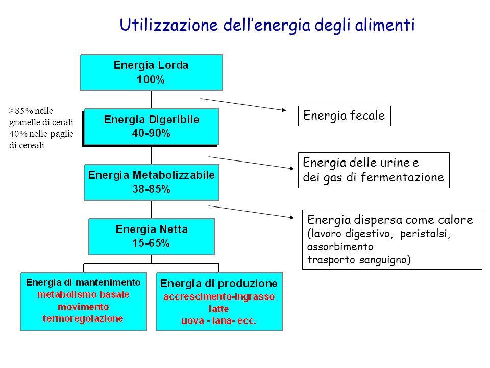Energia fecale Energia delle urine e dei gas di fermentazione Energia dispersa come calore (lavoro digestivo, peristalsi, assorbimento trasporto sangu