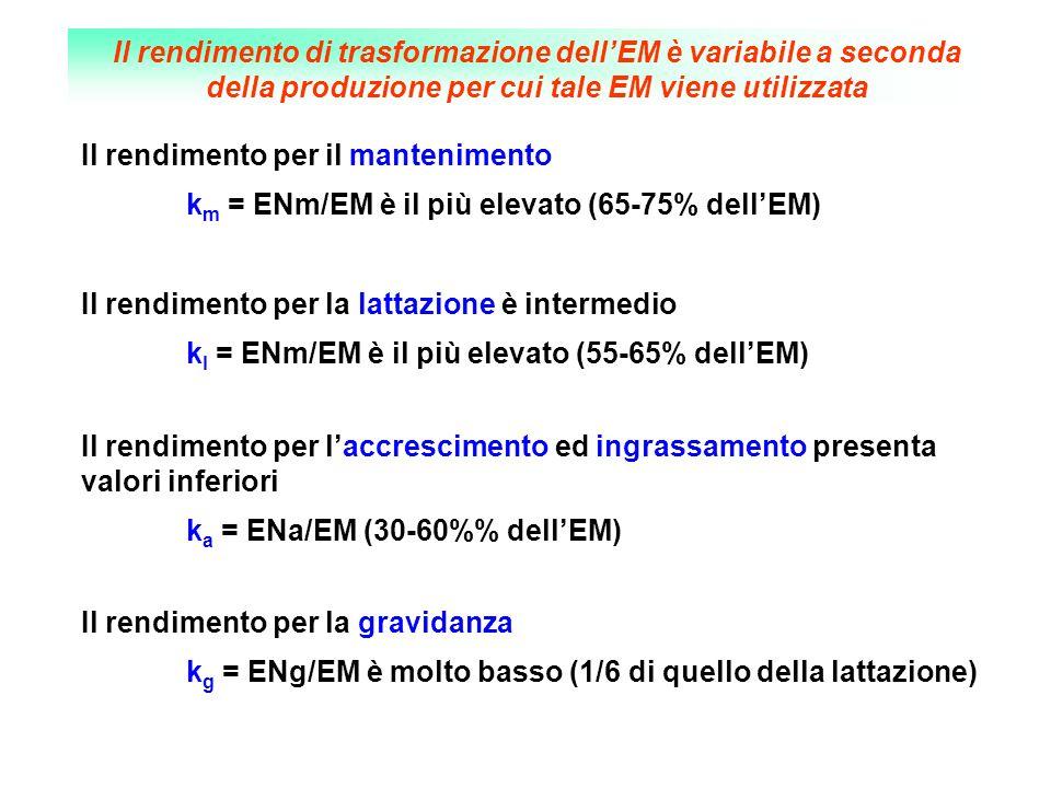 Il rendimento per il mantenimento k m = ENm/EM è il più elevato (65-75% dellEM) Il rendimento per la lattazione è intermedio k l = ENm/EM è il più ele
