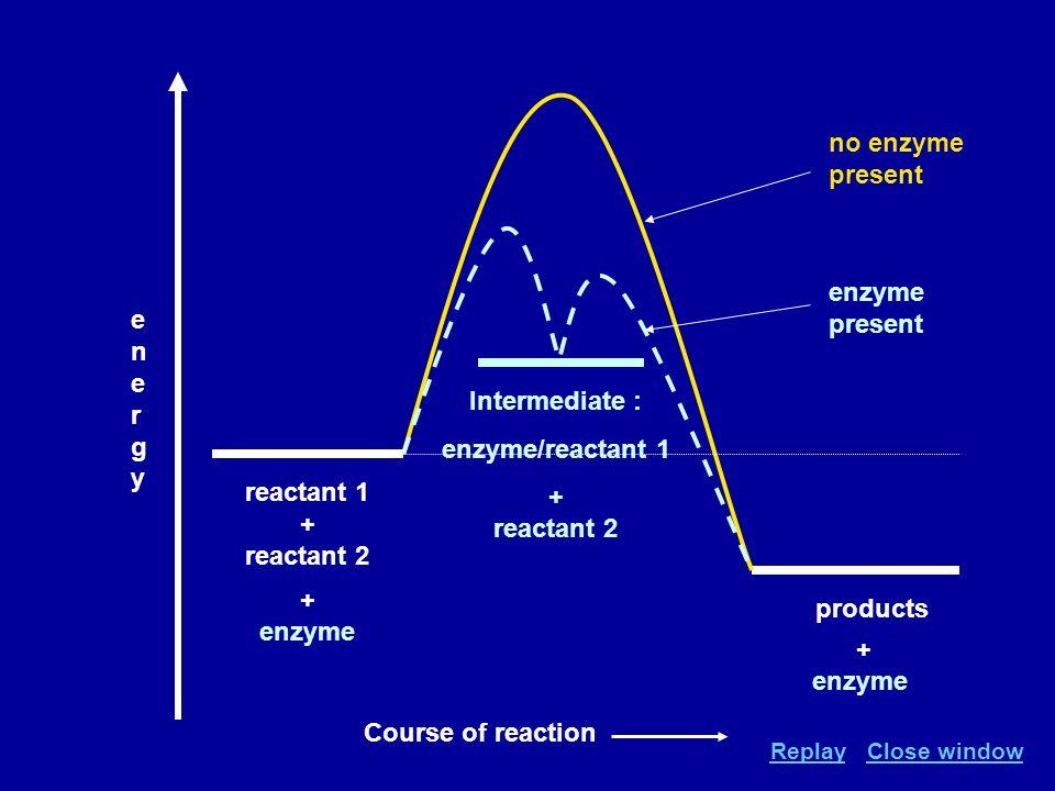 reactant 1 + reactant 2 products energyenergy Intermediate : enzyme/reactant 1 + reactant 2 no enzyme present enzyme present + enzyme Course of reacti