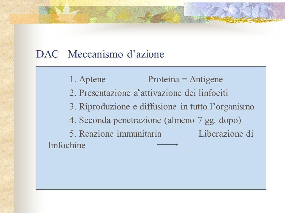 1. Aptene Proteina = Antigene 2. Presentazione a attivazione dei linfociti 3.