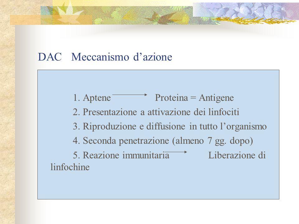 1. Aptene Proteina = Antigene 2. Presentazione a attivazione dei linfociti 3. Riproduzione e diffusione in tutto lorganismo 4. Seconda penetrazione (a