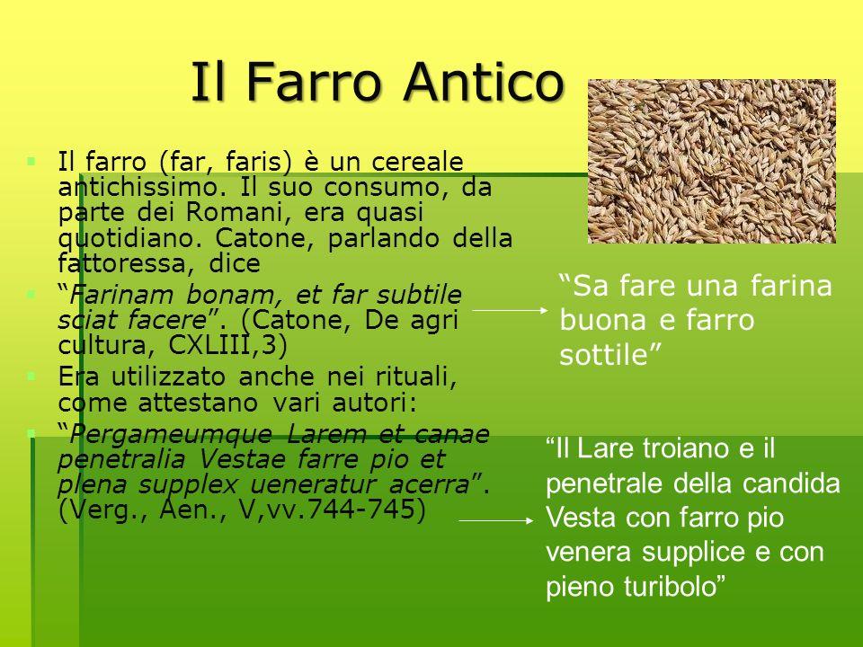Il Farro Antico Il farro (far, faris) è un cereale antichissimo. Il suo consumo, da parte dei Romani, era quasi quotidiano. Catone, parlando della fat