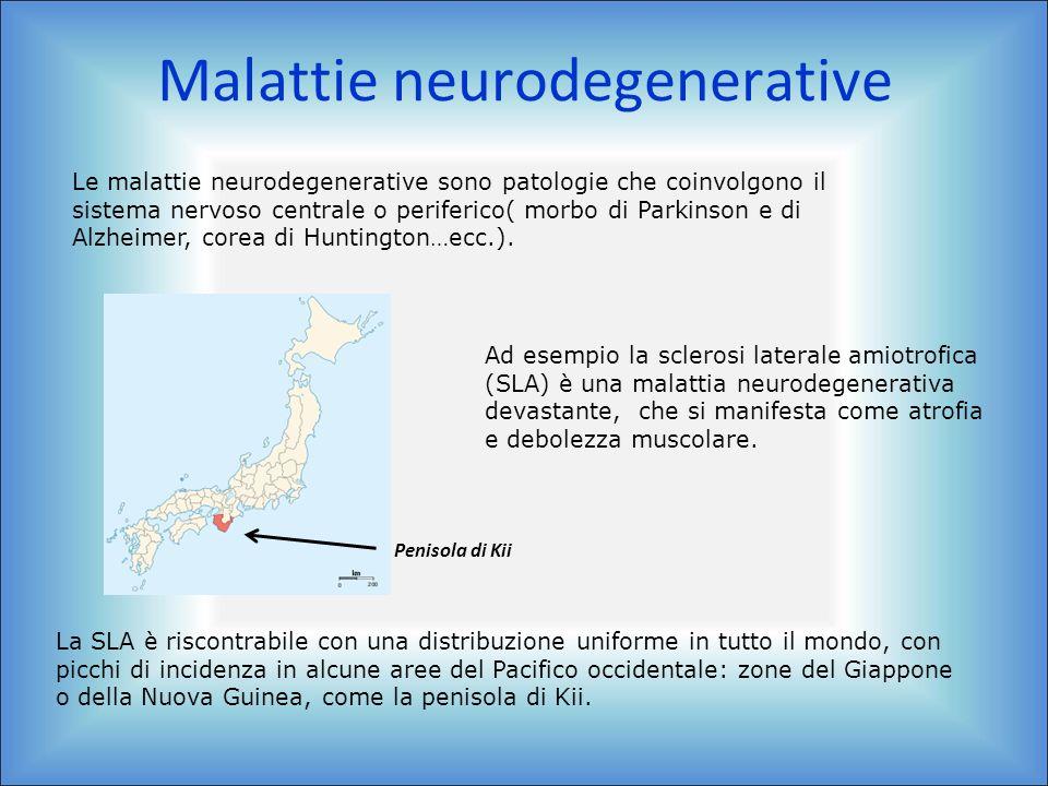 Malattie neurodegenerative Le malattie neurodegenerative sono patologie che coinvolgono il sistema nervoso centrale o periferico( morbo di Parkinson e