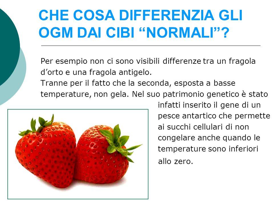 CHE COSA DIFFERENZIA GLI OGM DAI CIBI NORMALI? Per esempio non ci sono visibili differenze tra un fragola dorto e una fragola antigelo. Tranne per il