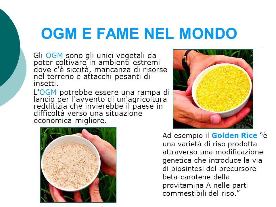 OGM E FAME NEL MONDO Gli OGM sono gli unici vegetali da poter coltivare in ambienti estremi dove c'è siccità, mancanza di risorse nel terreno e attacc