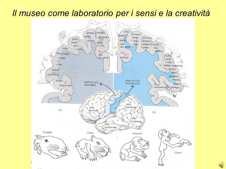 Il museo come laboratorio per i sensi e la creatività