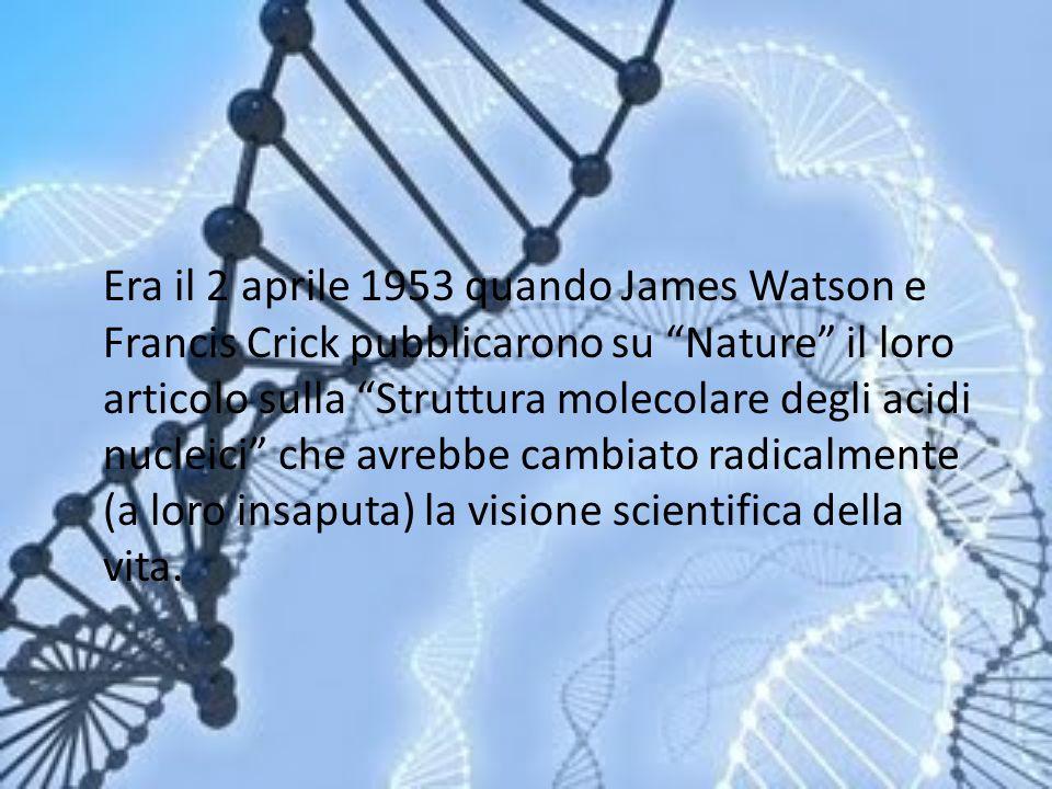 Era il 2 aprile 1953 quando James Watson e Francis Crick pubblicarono su Nature il loro articolo sulla Struttura molecolare degli acidi nucleici che a