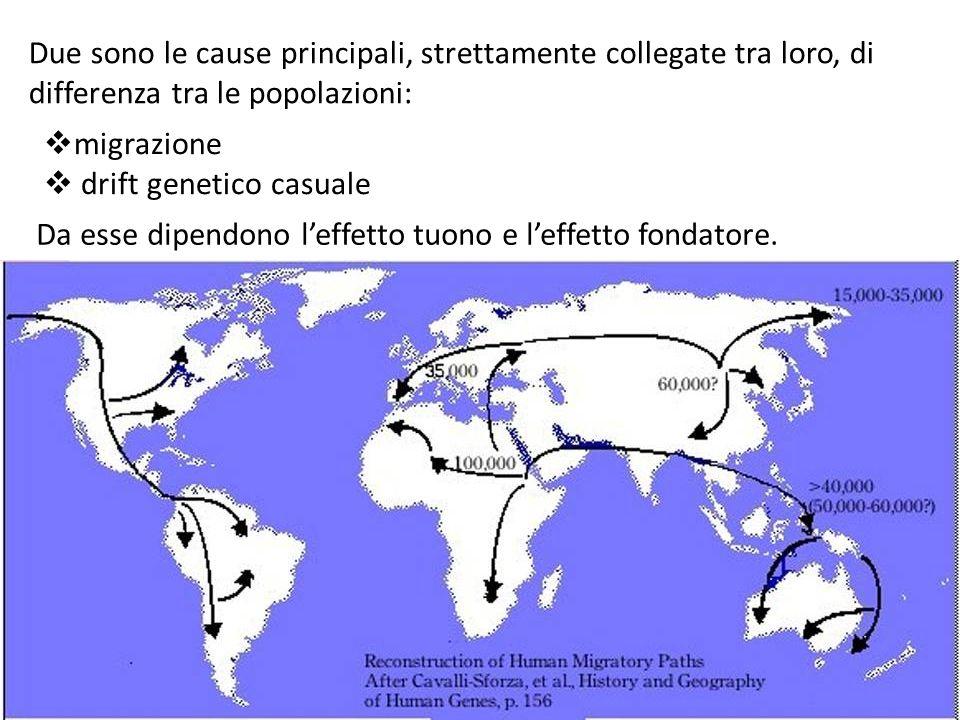 Due sono le cause principali, strettamente collegate tra loro, di differenza tra le popolazioni: migrazione drift genetico casuale Da esse dipendono leffetto tuono e leffetto fondatore.