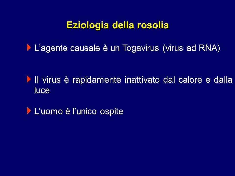Lagente causale è un Togavirus (virus ad RNA) Il virus è rapidamente inattivato dal calore e dalla luce Luomo è lunico ospite Eziologia della rosolia