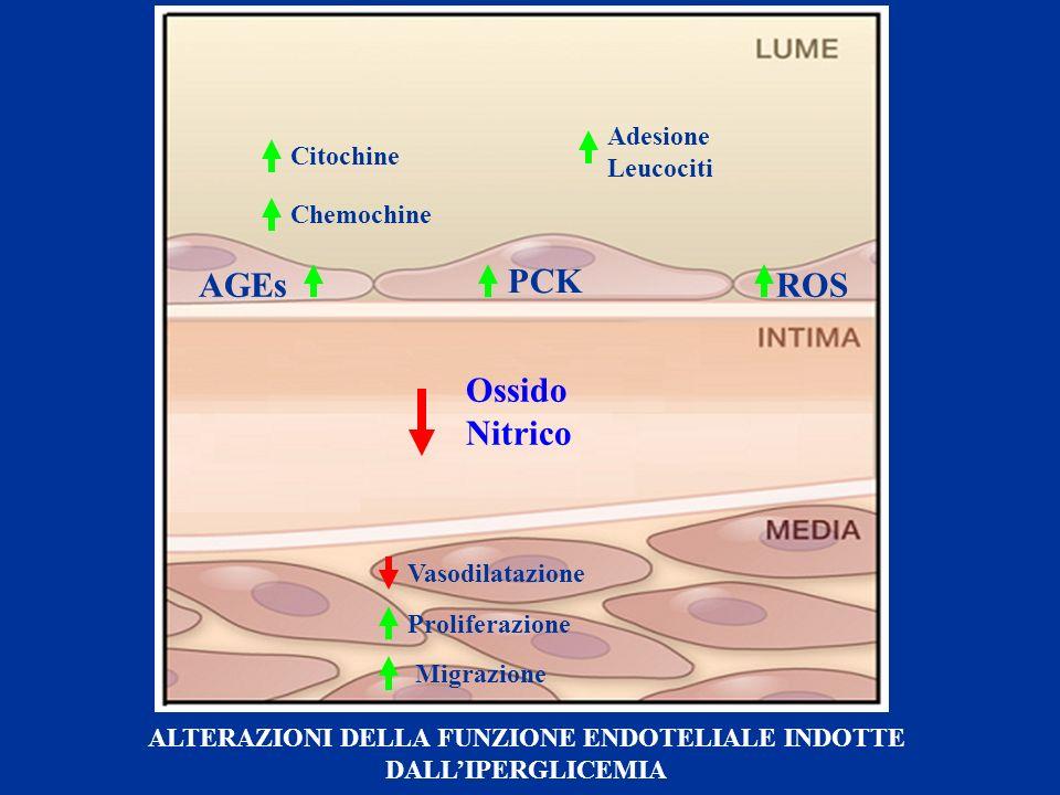 AGEs PCK ROS Ossido Nitrico Adesione Leucociti Citochine Chemochine Proliferazione Vasodilatazione Migrazione ALTERAZIONI DELLA FUNZIONE ENDOTELIALE I
