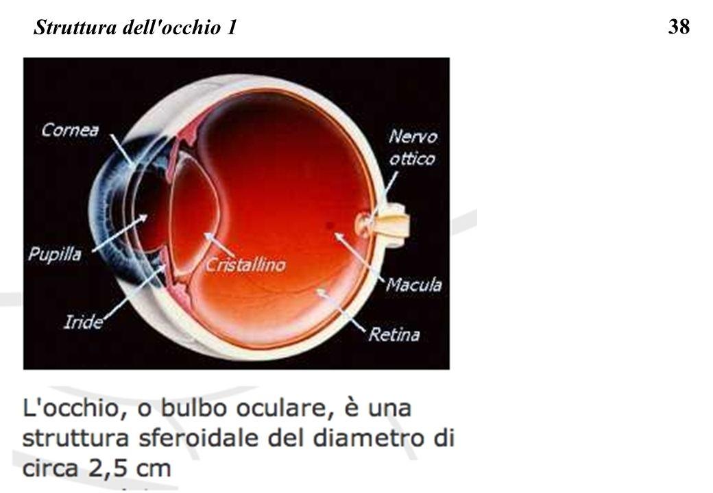 38 Struttura dell'occhio 1