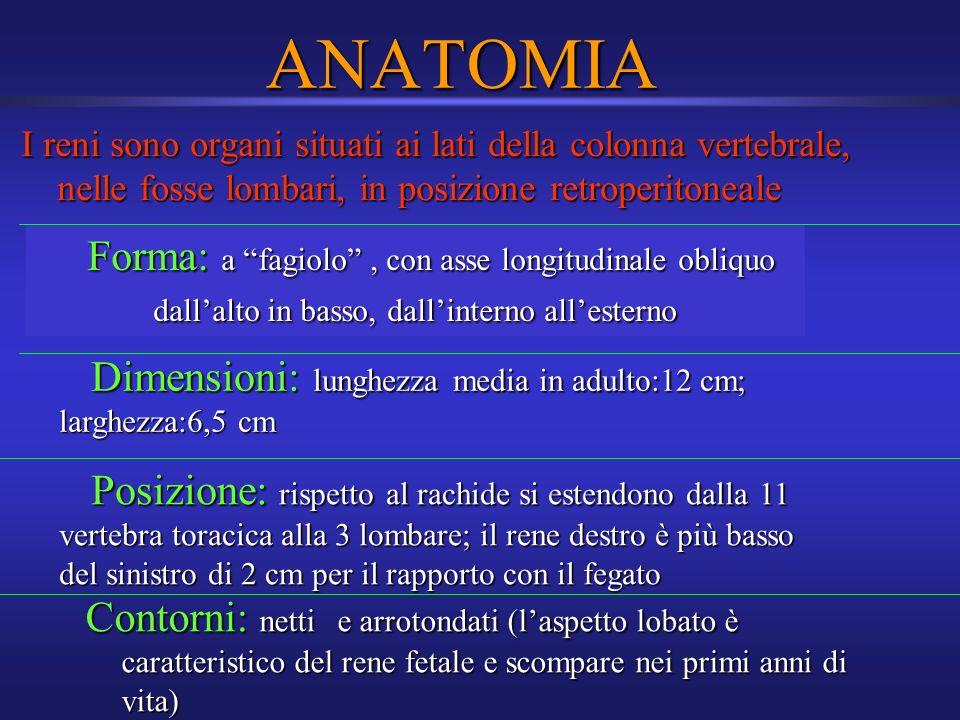 ANATOMIA I reni sono organi situati ai lati della colonna vertebrale, nelle fosse lombari, in posizione retroperitoneale Forma: a fagiolo, con asse lo