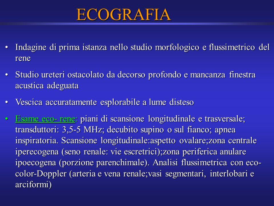 ECOGRAFIA Indagine di prima istanza nello studio morfologico e flussimetrico del reneIndagine di prima istanza nello studio morfologico e flussimetric