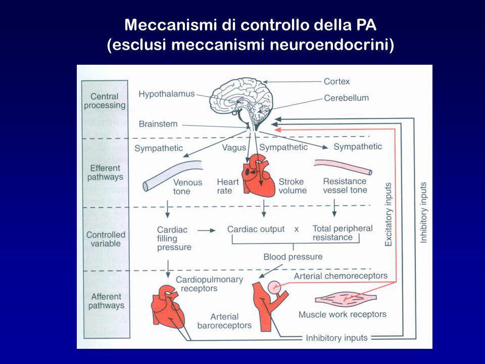 Meccanismi di controllo della PA (esclusi meccanismi neuroendocrini)