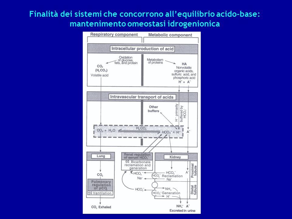 Finalità dei sistemi che concorrono allequilibrio acido-base: mantenimento omeostasi idrogenionica