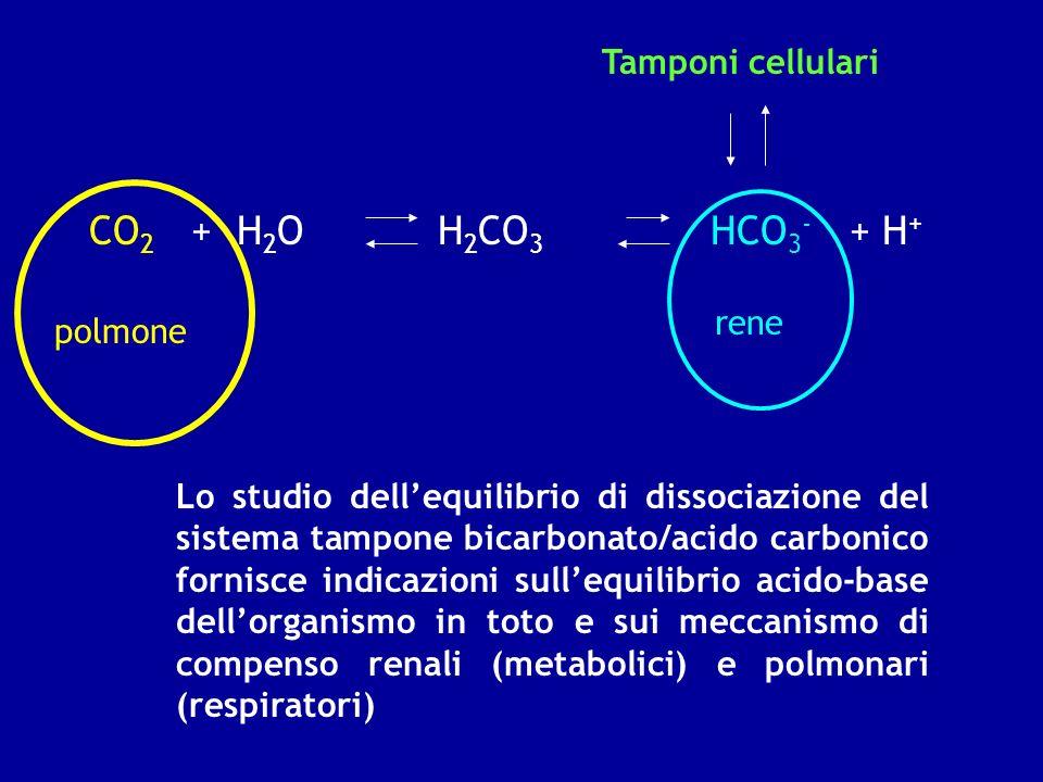 CO 2 + H 2 O H 2 CO 3 HCO 3 - + H + polmone rene Tamponi cellulari Lo studio dellequilibrio di dissociazione del sistema tampone bicarbonato/acido car