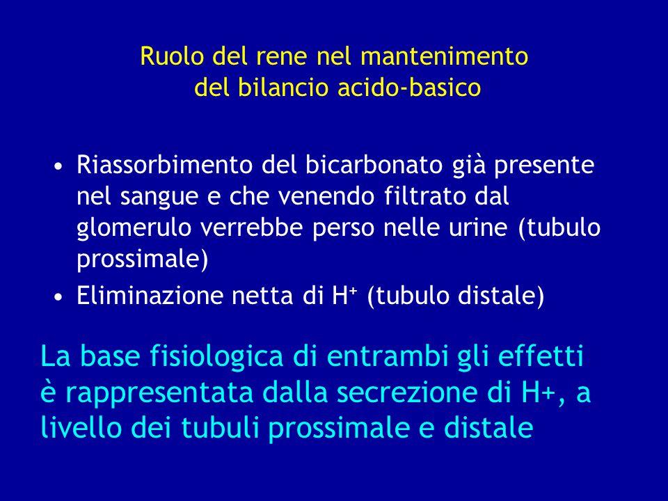 Ruolo del rene nel mantenimento del bilancio acido-basico Riassorbimento del bicarbonato già presente nel sangue e che venendo filtrato dal glomerulo