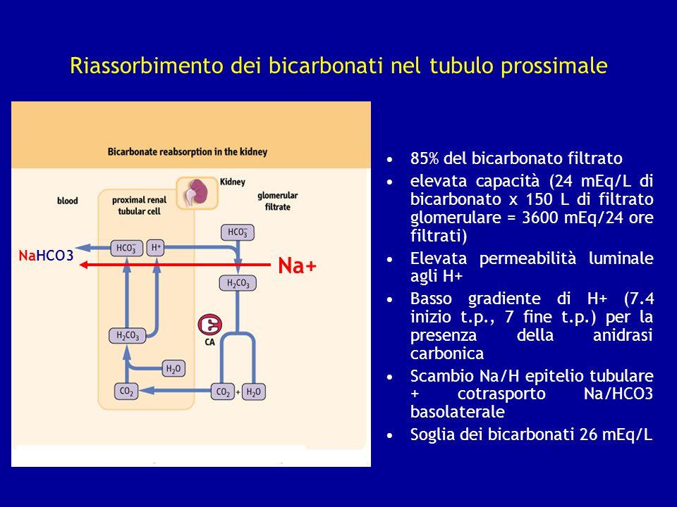 Riassorbimento dei bicarbonati nel tubulo prossimale 85% del bicarbonato filtrato elevata capacità (24 mEq/L di bicarbonato x 150 L di filtrato glomer