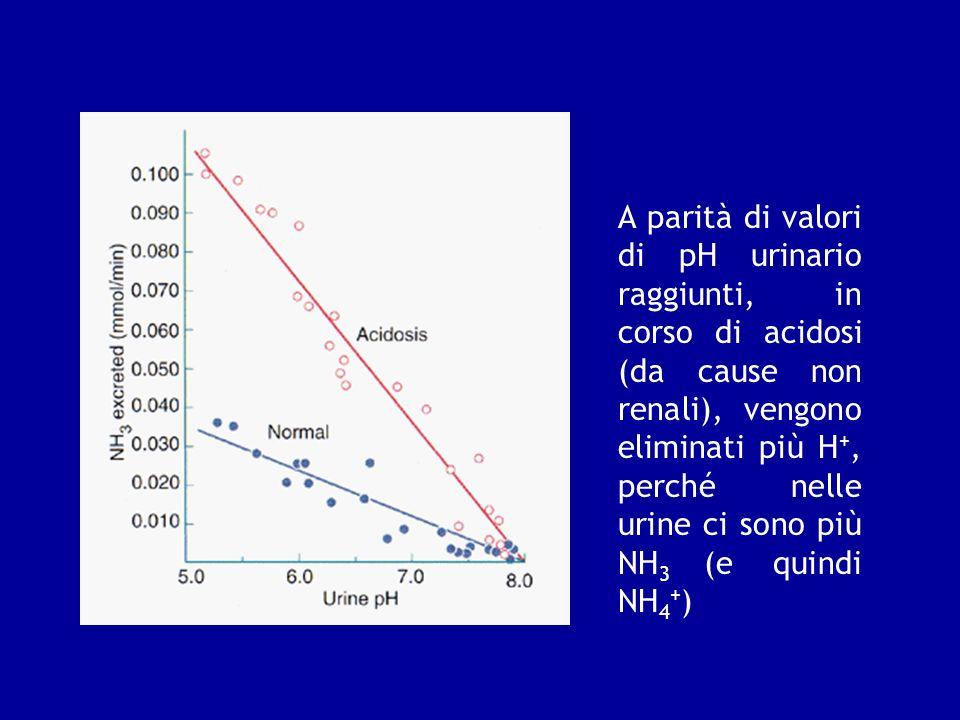 A parità di valori di pH urinario raggiunti, in corso di acidosi (da cause non renali), vengono eliminati più H +, perché nelle urine ci sono più NH 3