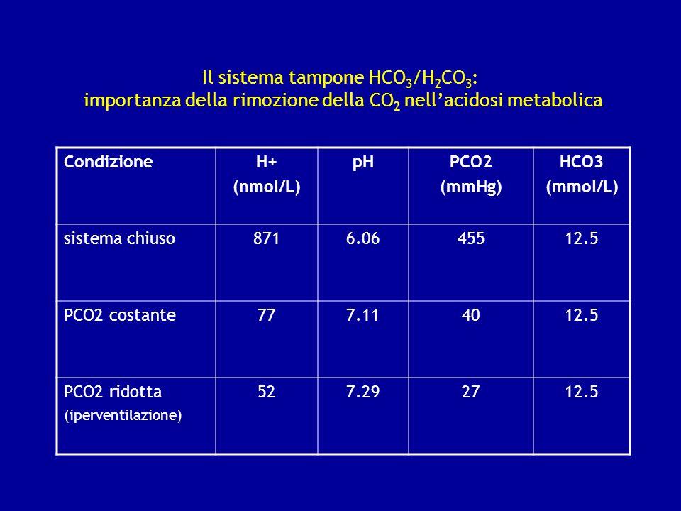 Il sistema tampone HCO 3 /H 2 CO 3 : importanza della rimozione della CO 2 nellacidosi metabolica CondizioneH+ (nmol/L) pHPCO2 (mmHg) HCO3 (mmol/L) si