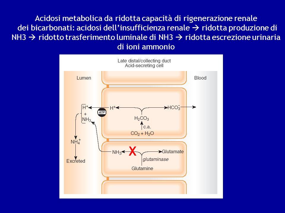 Acidosi metabolica da ridotta capacità di rigenerazione renale dei bicarbonati: acidosi dellinsufficienza renale ridotta produzione di NH3 ridotto tra
