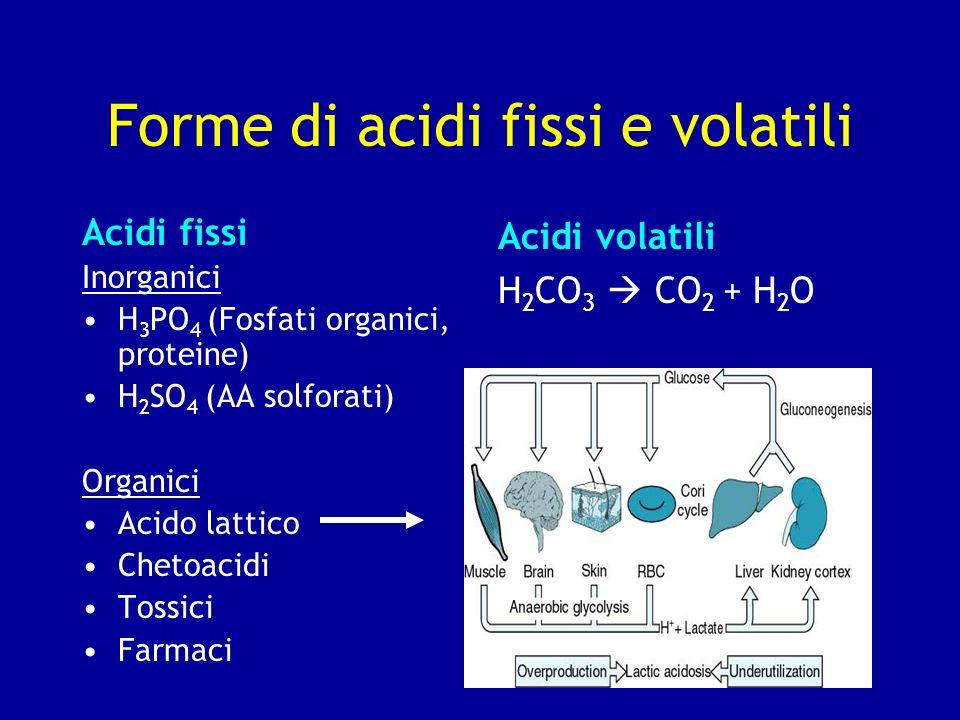 Forme di acidi fissi e volatili Acidi fissi Inorganici H 3 PO 4 (Fosfati organici, proteine) H 2 SO 4 (AA solforati) Organici Acido lattico Chetoacidi