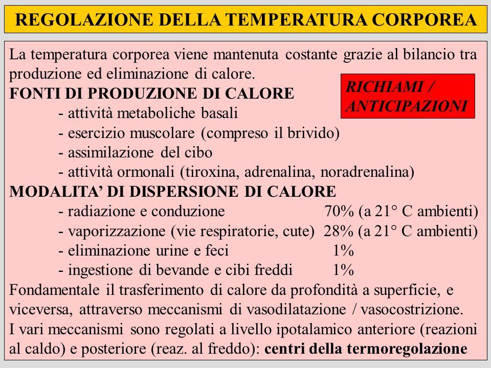 REGOLAZIONE DELLA TEMPERATURA CORPOREA La temperatura corporea viene mantenuta costante grazie al bilancio tra produzione ed eliminazione di calore. F